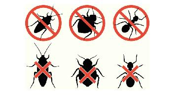 Pest Control Bugs